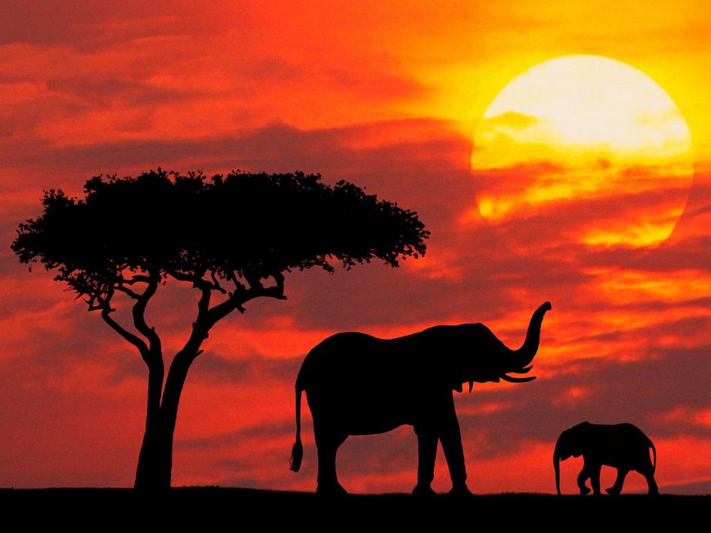 Картинки и обои Слоны