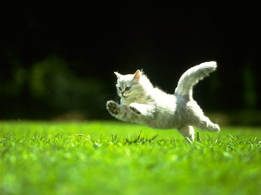 очень пушистый котик прыгает календарь рыбака декабрь