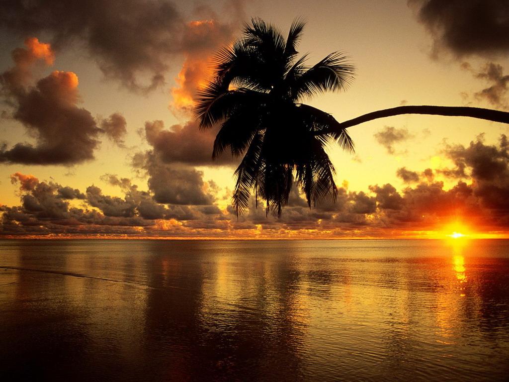 Пальма и закат над морем - клевые обои