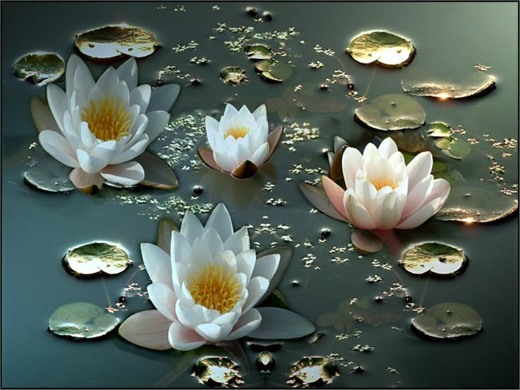 Водяные лилии в воде обои