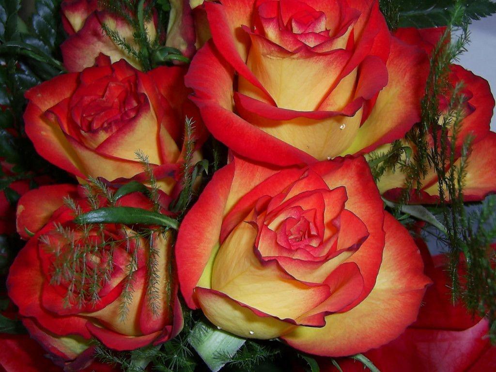 Букет красно желтых роз большие обои