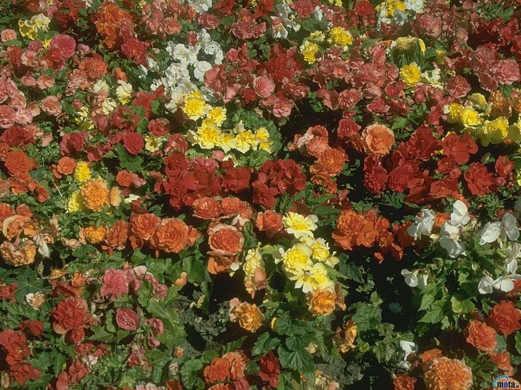 Море цветов - скачать бесплатные обои ...: wallpage.ru/oboi_more_cvetov-17811.php