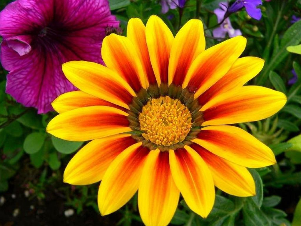 Красивые цветы большое