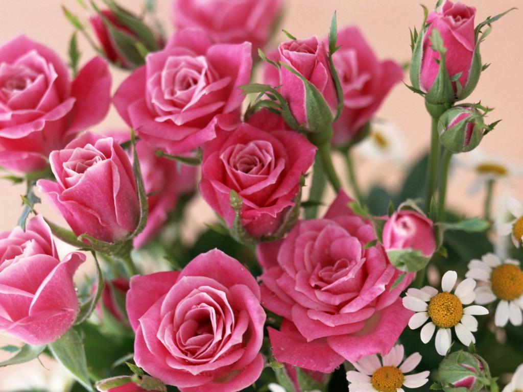 Букет роз и ромашек - обои