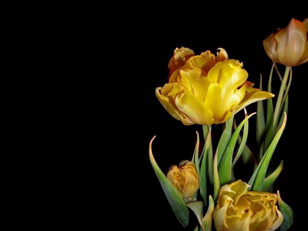 Жёлтые цветочки на чёрном фоне обои