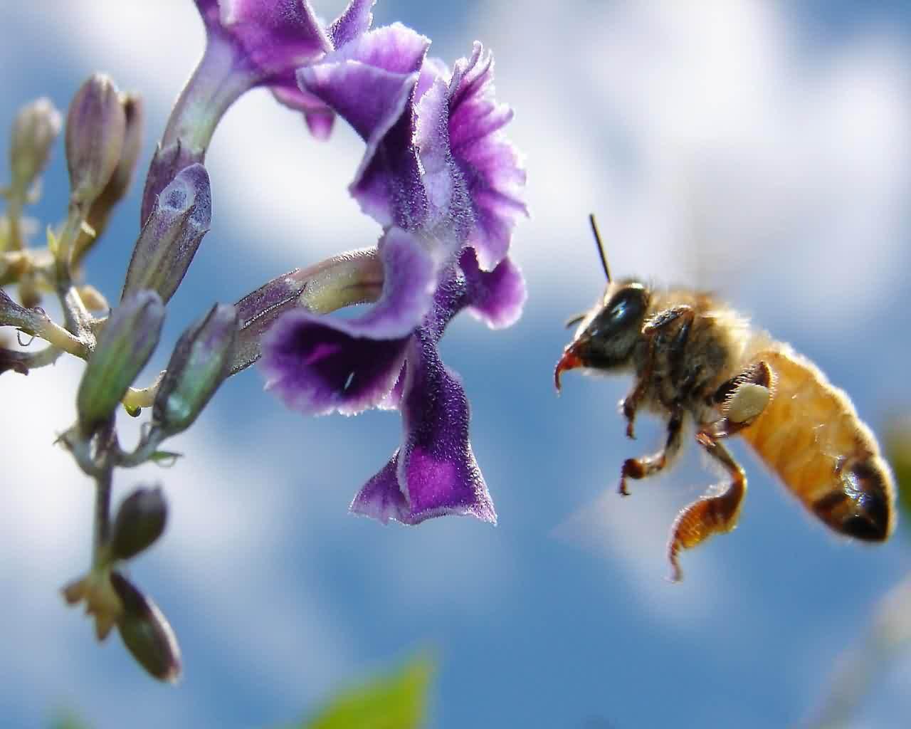 Скачать обои Пчелы