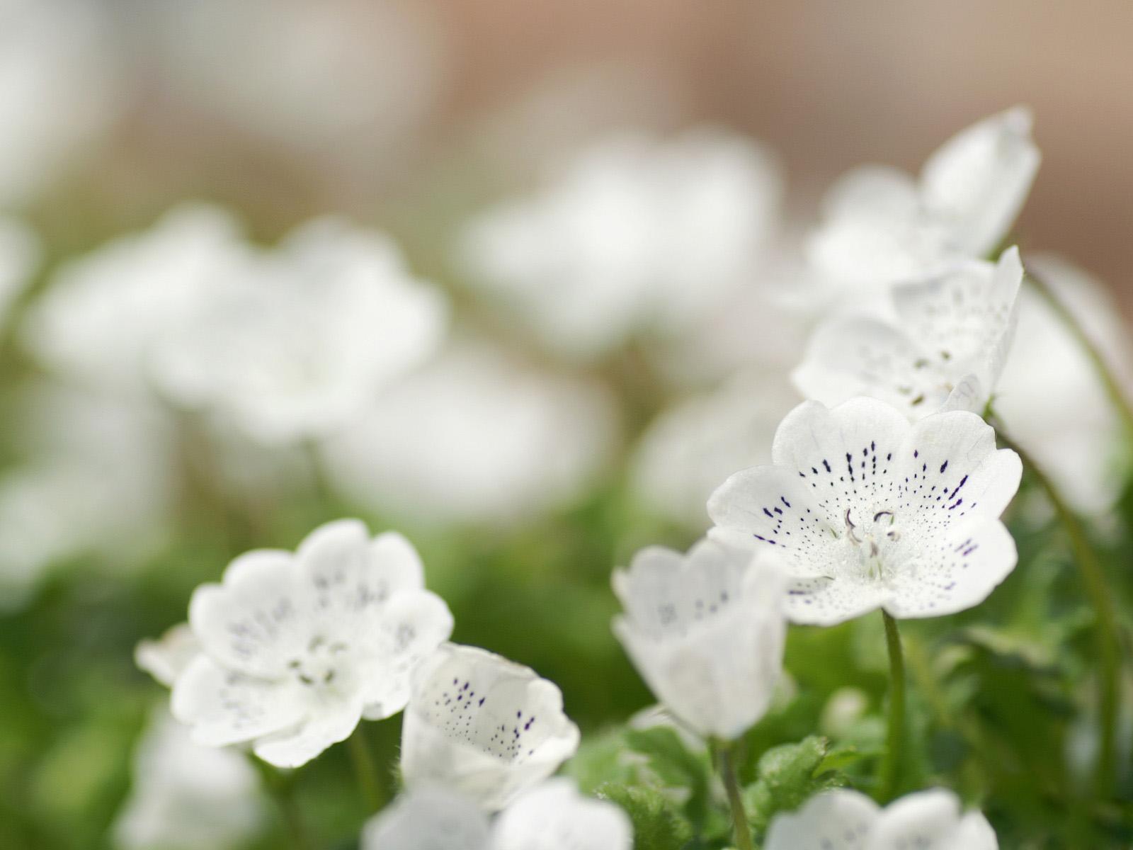 Белые цветы весенние
