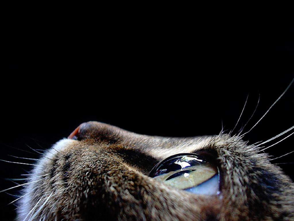 Кошачья морда обои