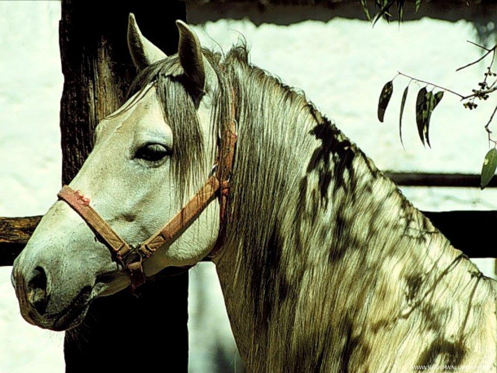 Лошадь, фоновые рисунки на рабочий стол с лошадьми обои