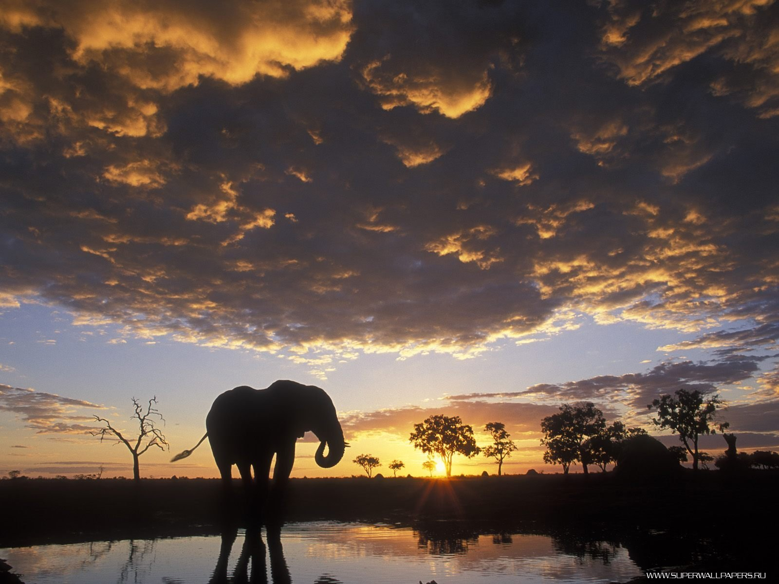 Скачать обои Слоны