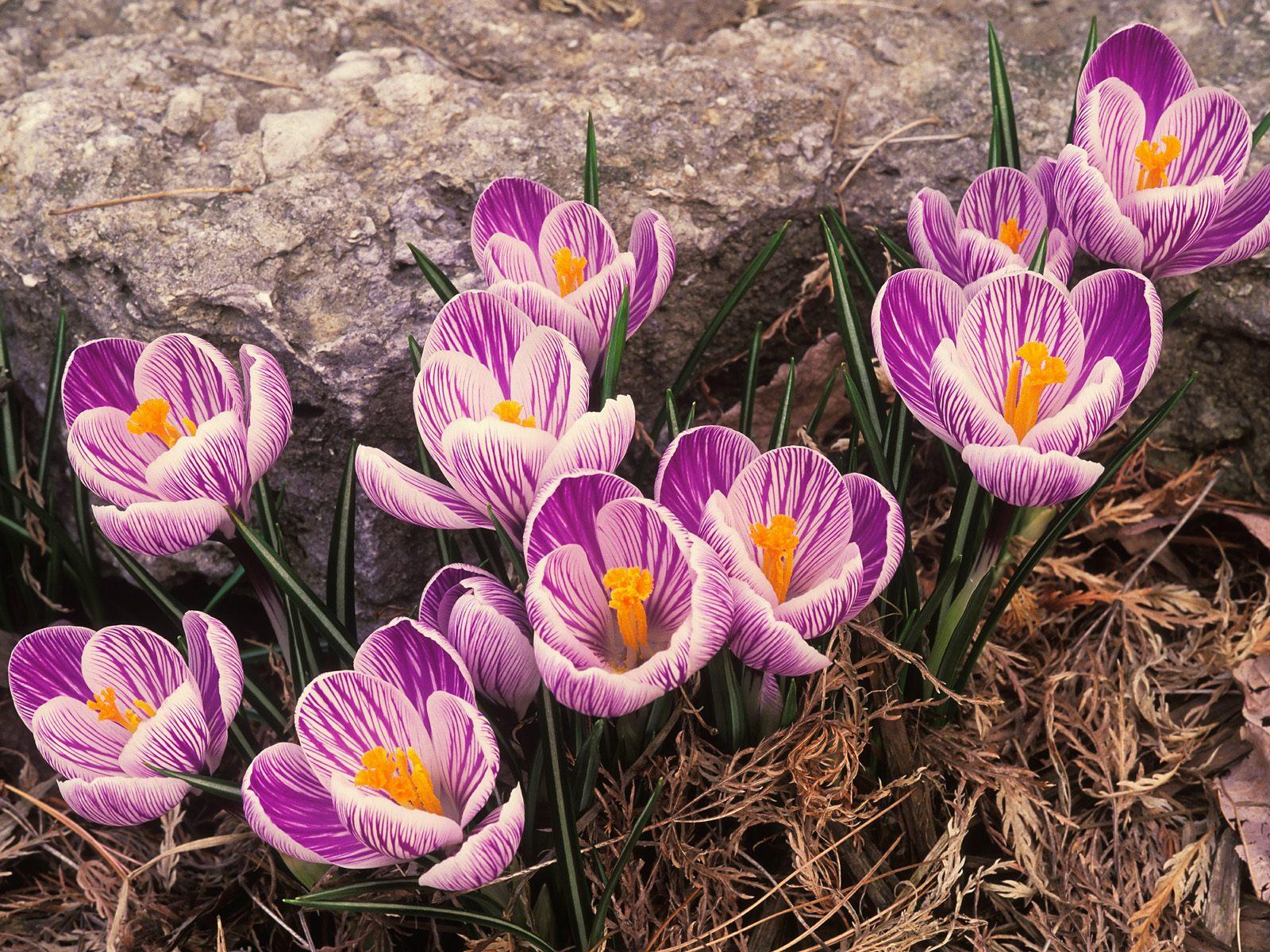 Весна обои
