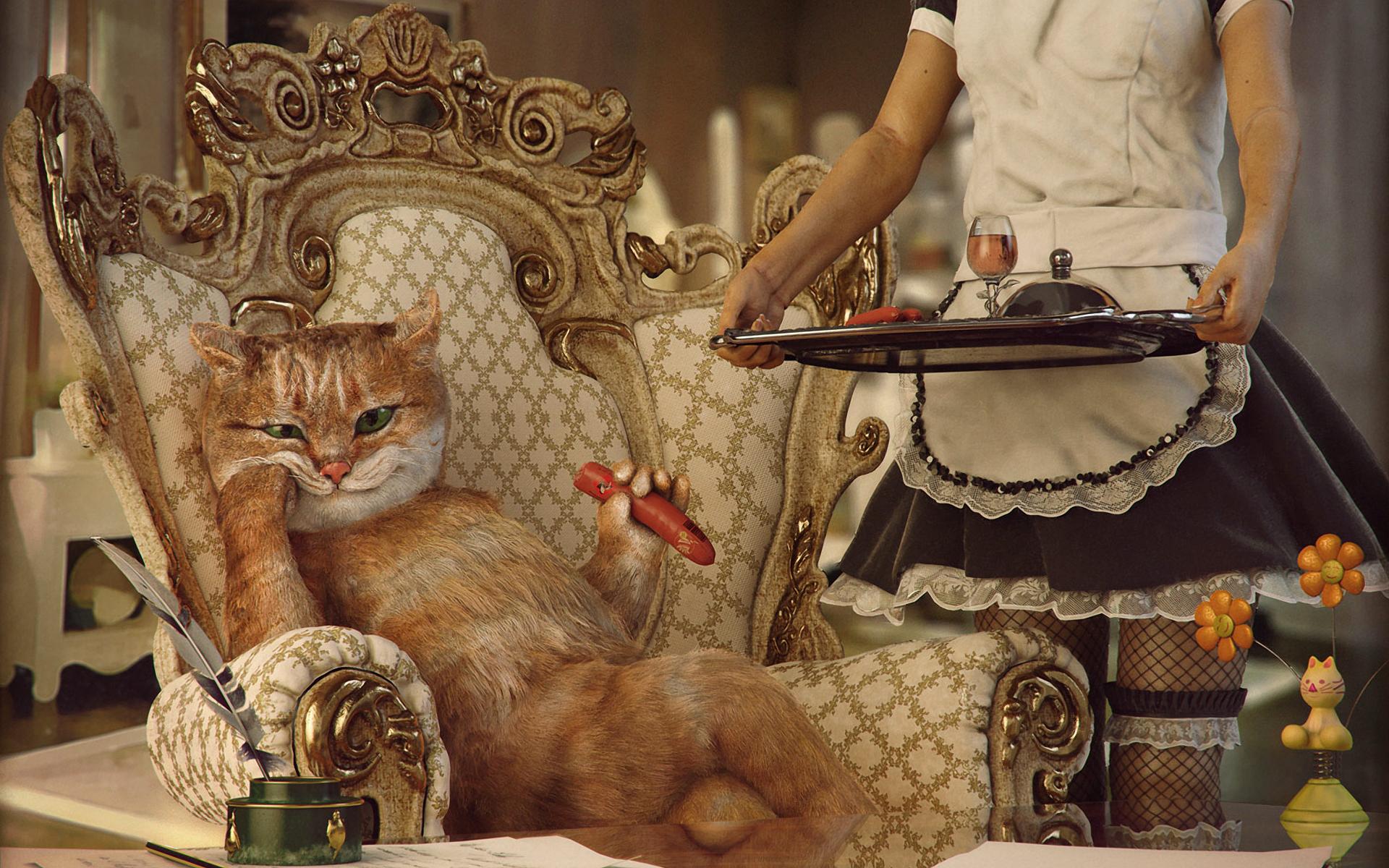 Деловой кот - обои