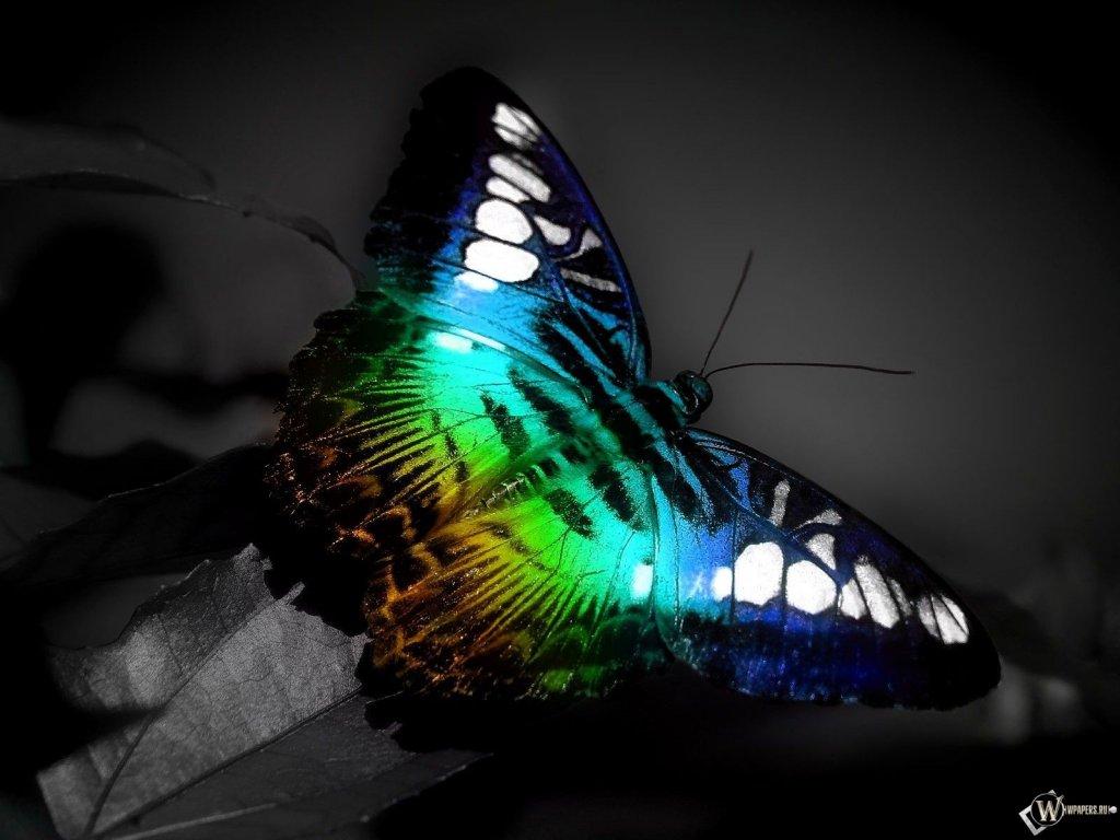 Прекрасная бабочка обои