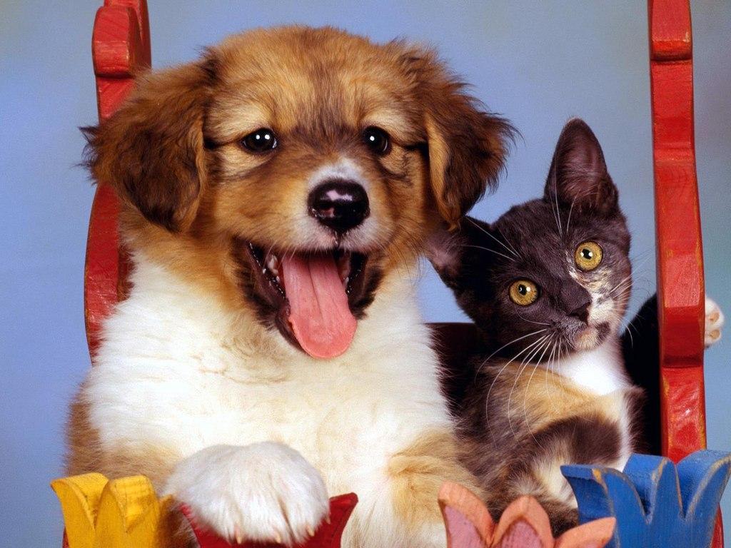 Котята и щенки милые и красивые фото