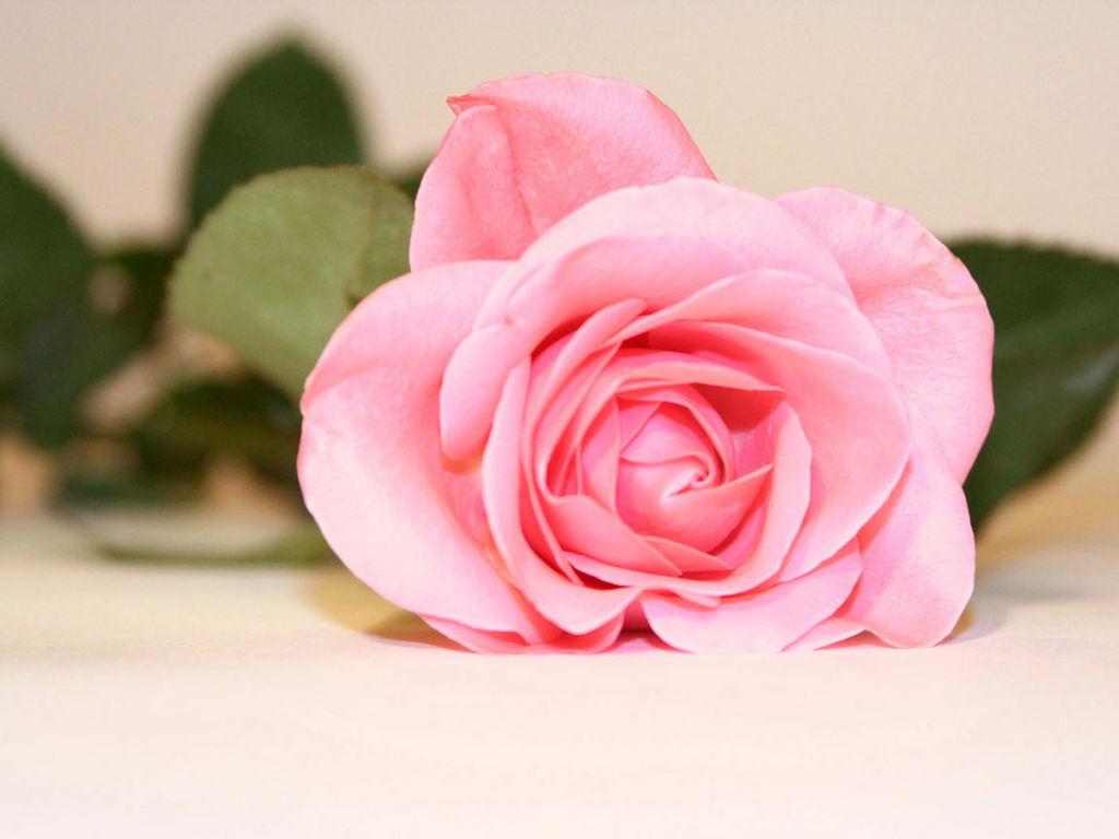 Розы и поздравление картинки