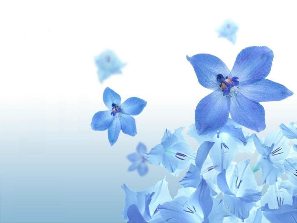 Цветы обои