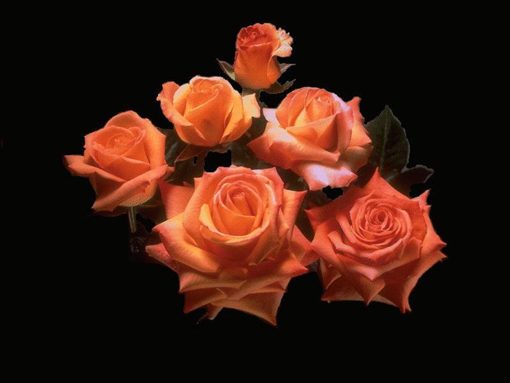Открытки цветов на черном фоне