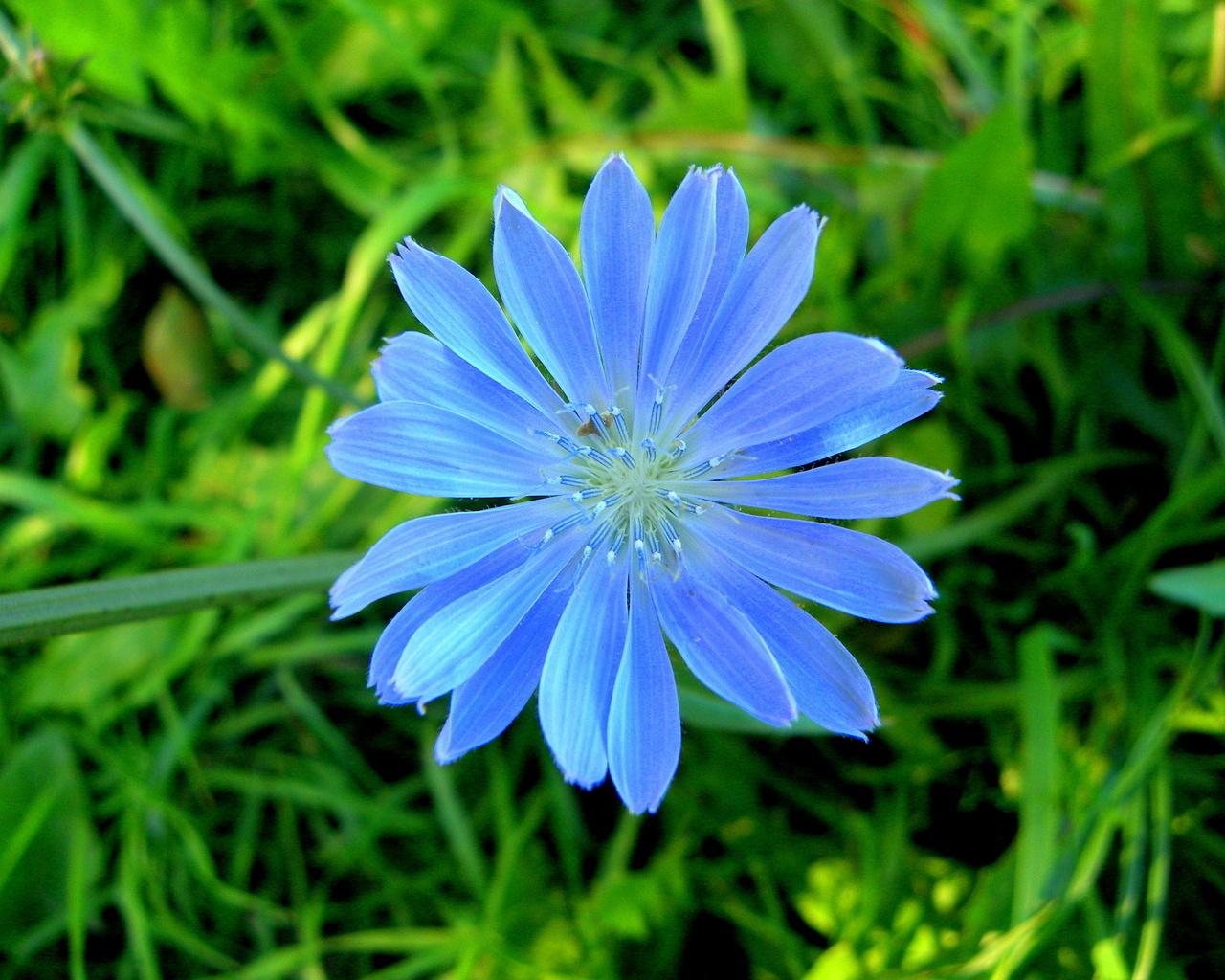Бесплатные обои на рабочий стол природа цветы 13