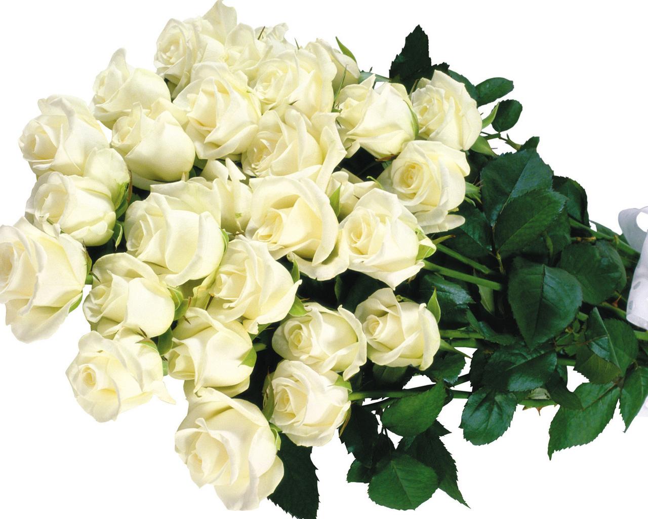 Белые розы.  Цветы большие обои