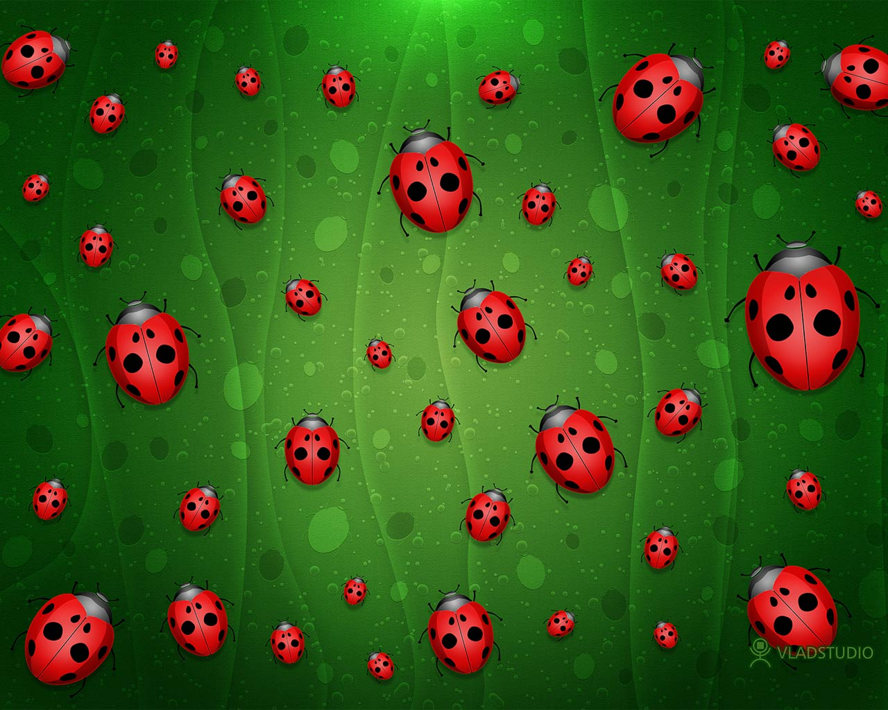 All is Full of Ladybugs 3d обои