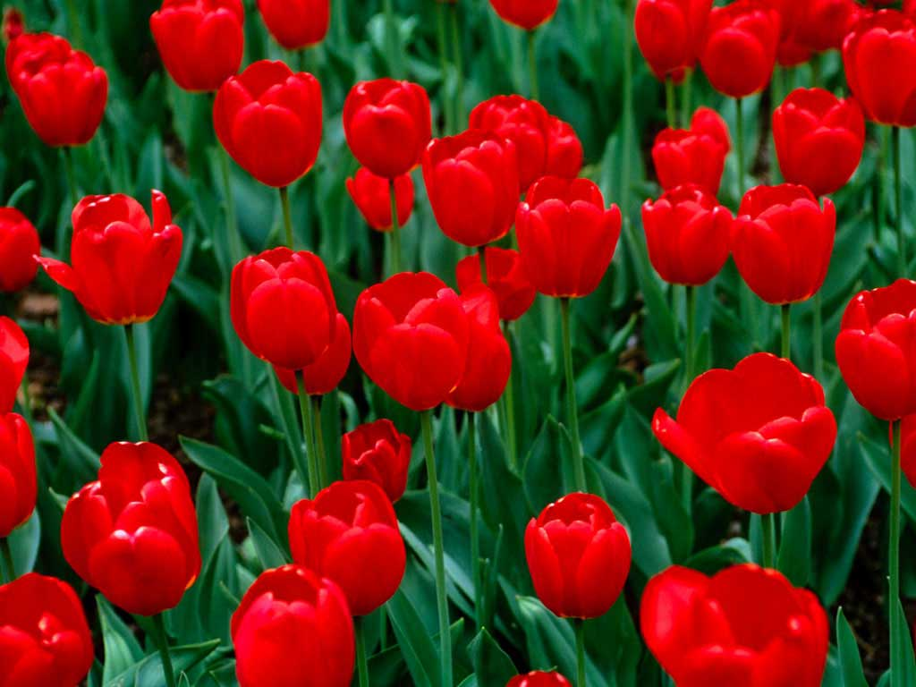 бесплатные картинки цветы: