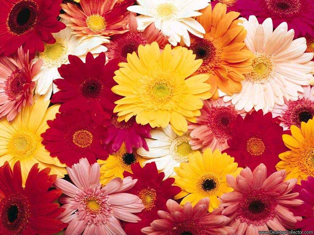 Для рабочего стола букеты цветов обои