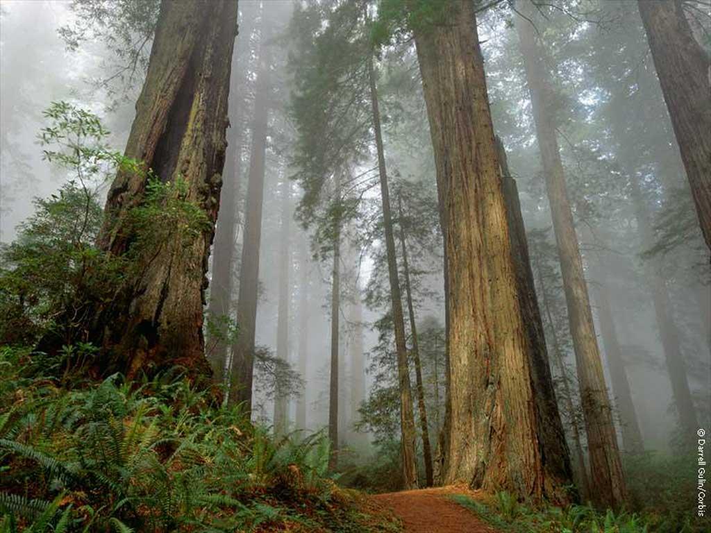 Bild, desktop-hintergrundbilder mit der natur bilder auf ihrem desktop