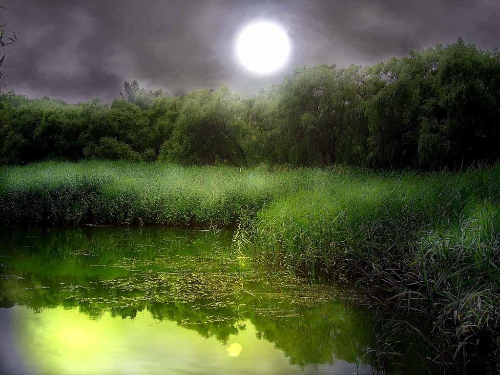 Лунная ночь обои