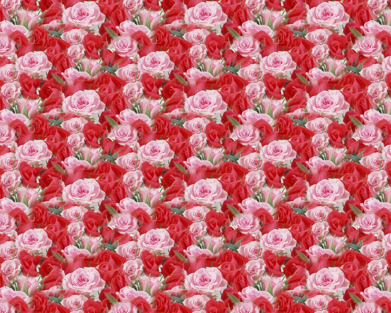 Море цветов фото роз
