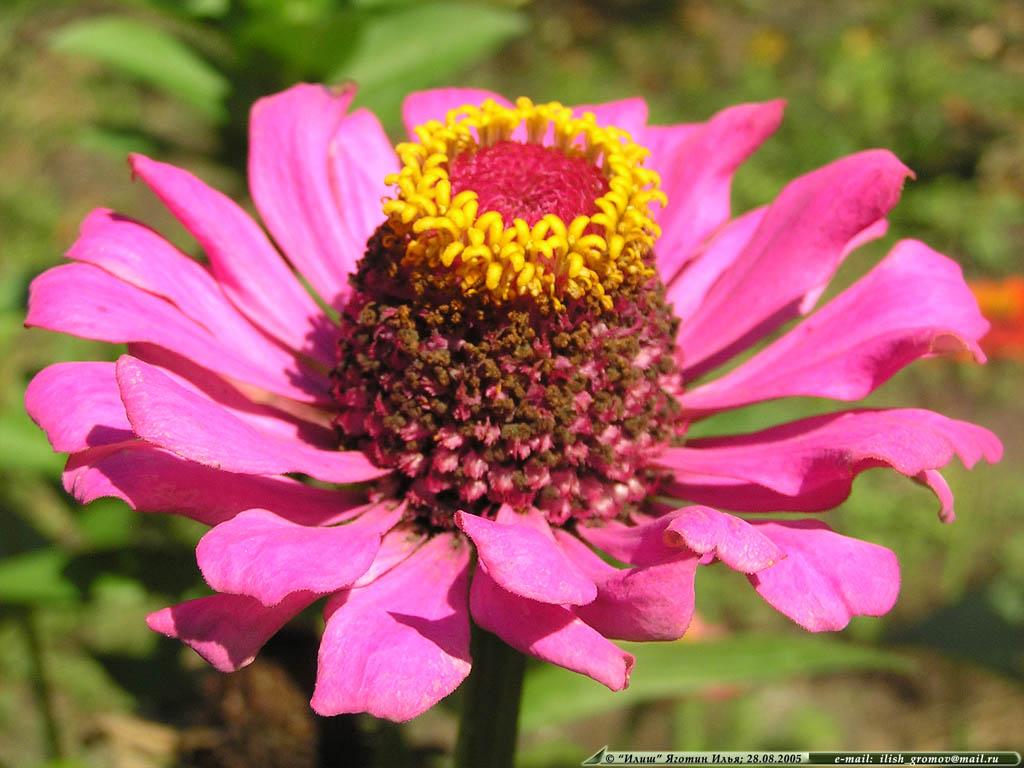 Необычный цветок гламурные обои