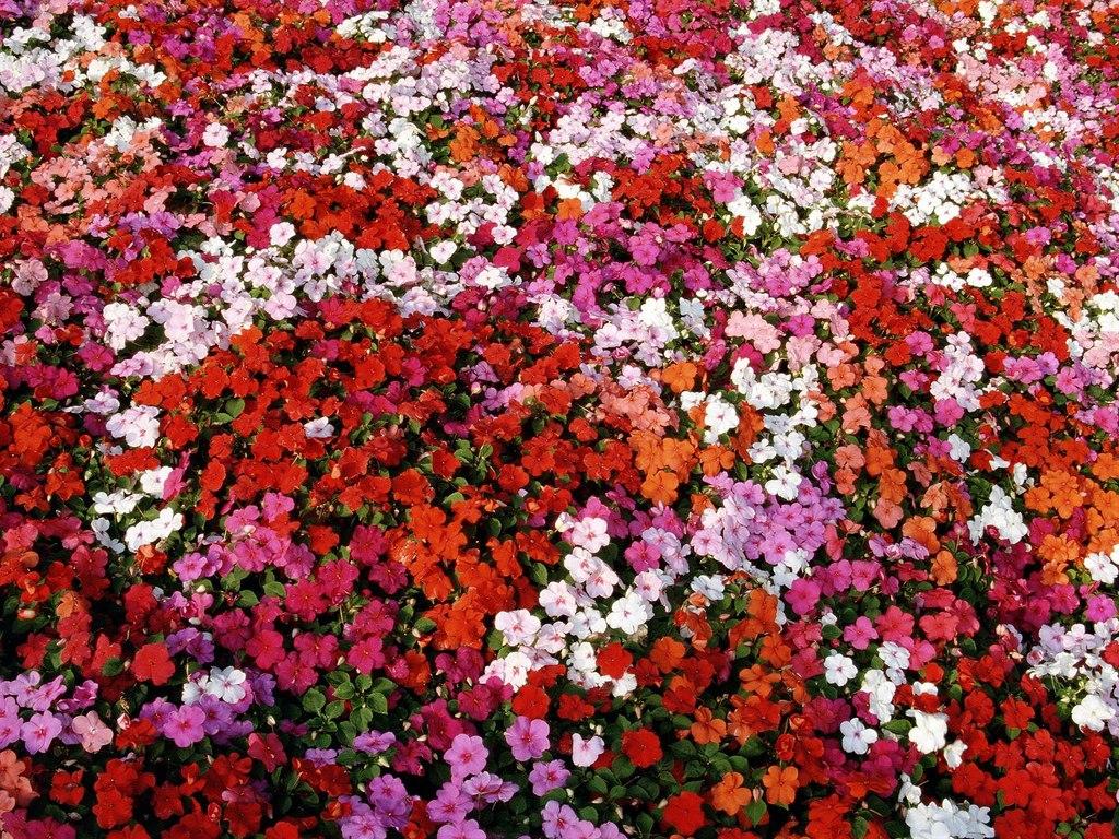 Море цветов клевые обои