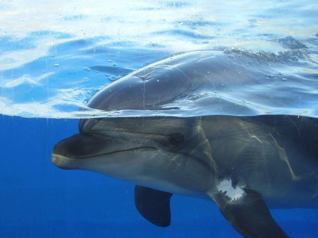игры дельфин 78