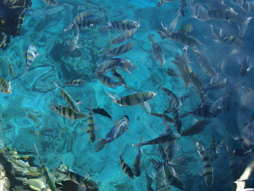 рыбки красного моря обои