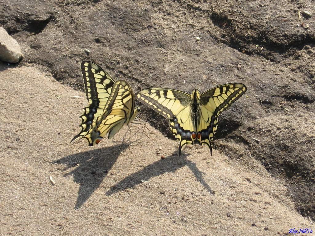 Бабочки обои