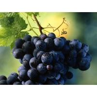Виноград обои (2 шт.)