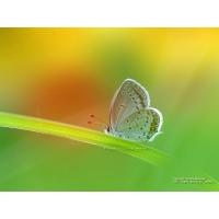 Бабочки обои (18 шт.)