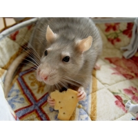 Мыши обои (4 шт.)