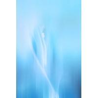 iPhone бесплатные картинки на рабочий стол