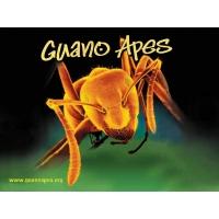 Guano Apes обои (2 шт.)