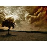 Деревья обои (4 шт.)