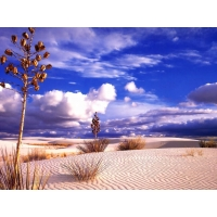 Пустыни обои (2 шт.)