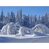Зима обои (44 шт.)