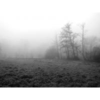 Туман обои (19 шт.)