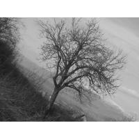 Деревья обои (20 шт.)