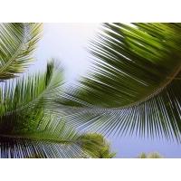 Пальмы обои (22 шт.)