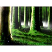 Леса обои (6 шт.)
