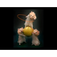 Мышки обои (3 шт.)