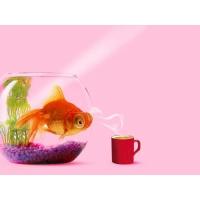 Рыбки обои (2 шт.)