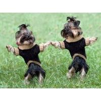 Собаки обои (10 шт.)