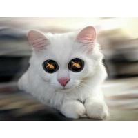 У кошака в глазах одна цель - обои и картинки для компьютера, рубрика - юмор